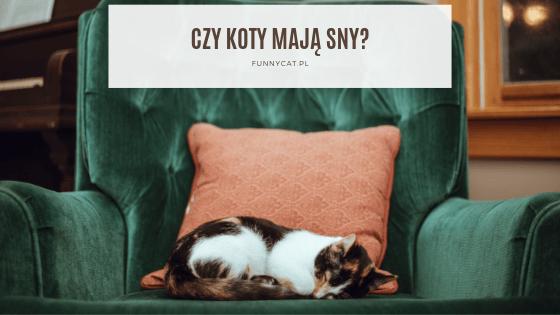 czt koty maja sny
