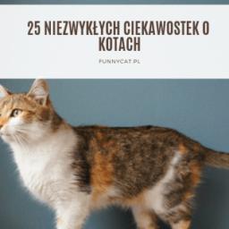 25 ciekawostek o kotach