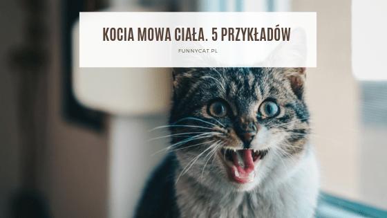 mowa ciała kota