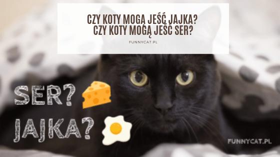 czy kot może jeść ser