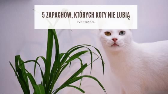 zapachy których koty nie lubią