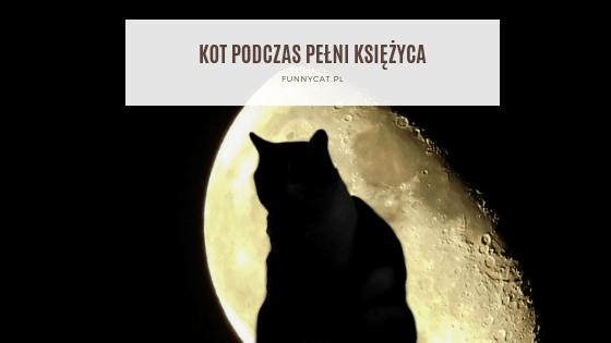 kot podczas pełni