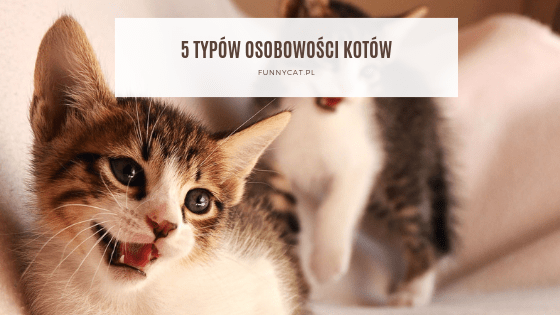 kot osobowość