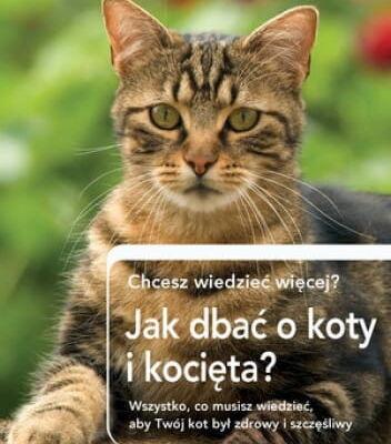 Jak dbać o koty i kocięta? - praca zbiorowa